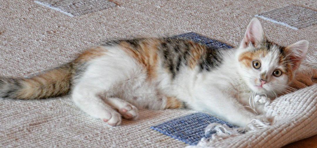 Scegliere il tappeto giusto per il soggiorno