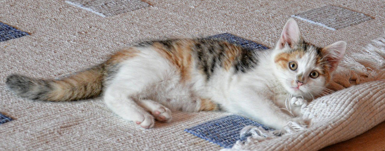 Scegliere il tappeto giusto per il soggiorno-Architettura a domicilio®